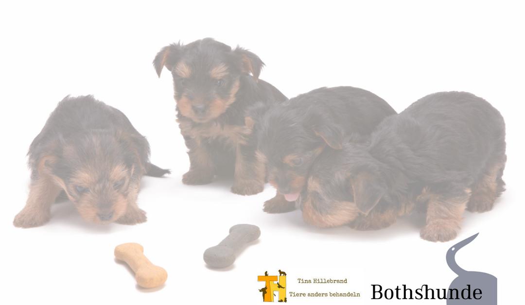 Gastartikel: Orale Toleranz beim Hund