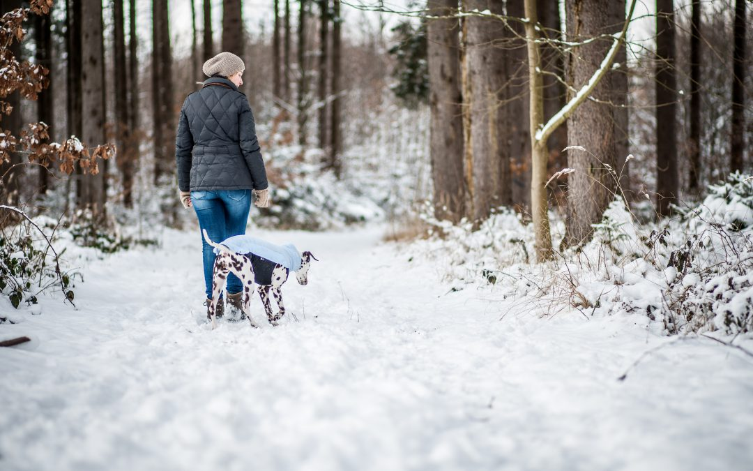 Die Stille der Natur mit dem Hund genießen