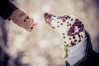 Bothshunde - gemeinsam glücklicher
