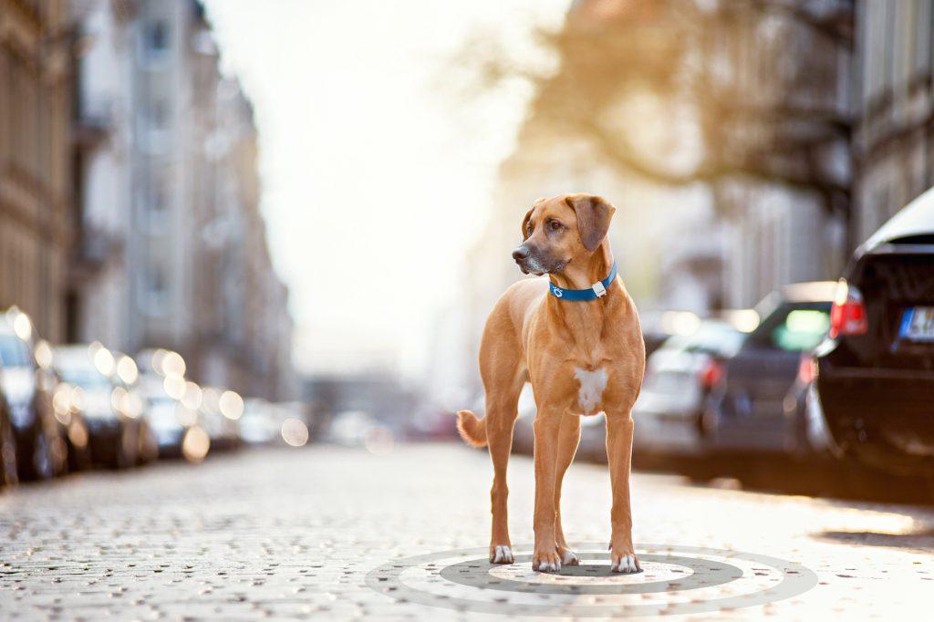 weggelaufen Hund wiederfinden