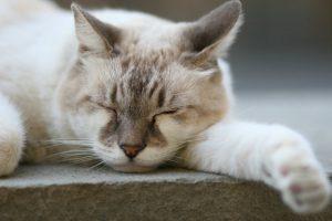 schlafende Katze, Ruhebedürfnis, Stress beim Hund, hyperaktiver Hund
