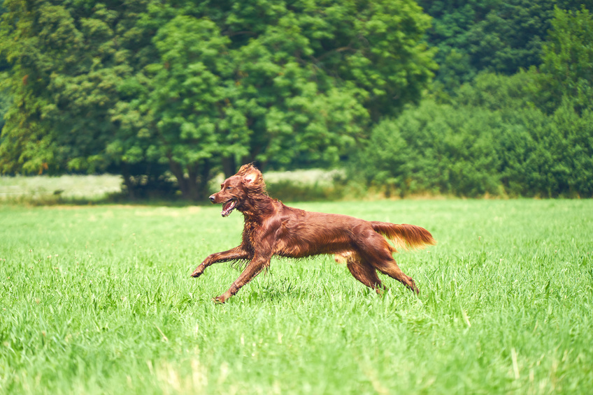 Was kannst du tun wenn dein Hund weggelaufen ist?