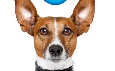 40 Gründe warum der Hund nicht zurück kommen kann Teil 1