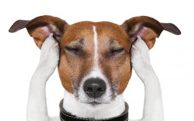 40 Gründe warum der Hund nicht zurück kommen kann Teil 2
