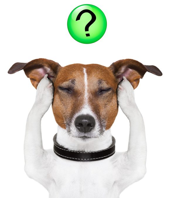 Hundeerziehung hyperaktive Hunde Rueckruf Hund kommt nicht