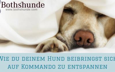 Wie du deinem Hund beibringst sich auf Kommando zu entspannen