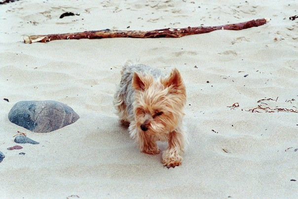 Liebeserklärung an einen Herzhund, oder: der erste Hund ist immer etwas Besonderes