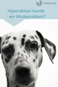 Modeproblem hyperaktiver Hund