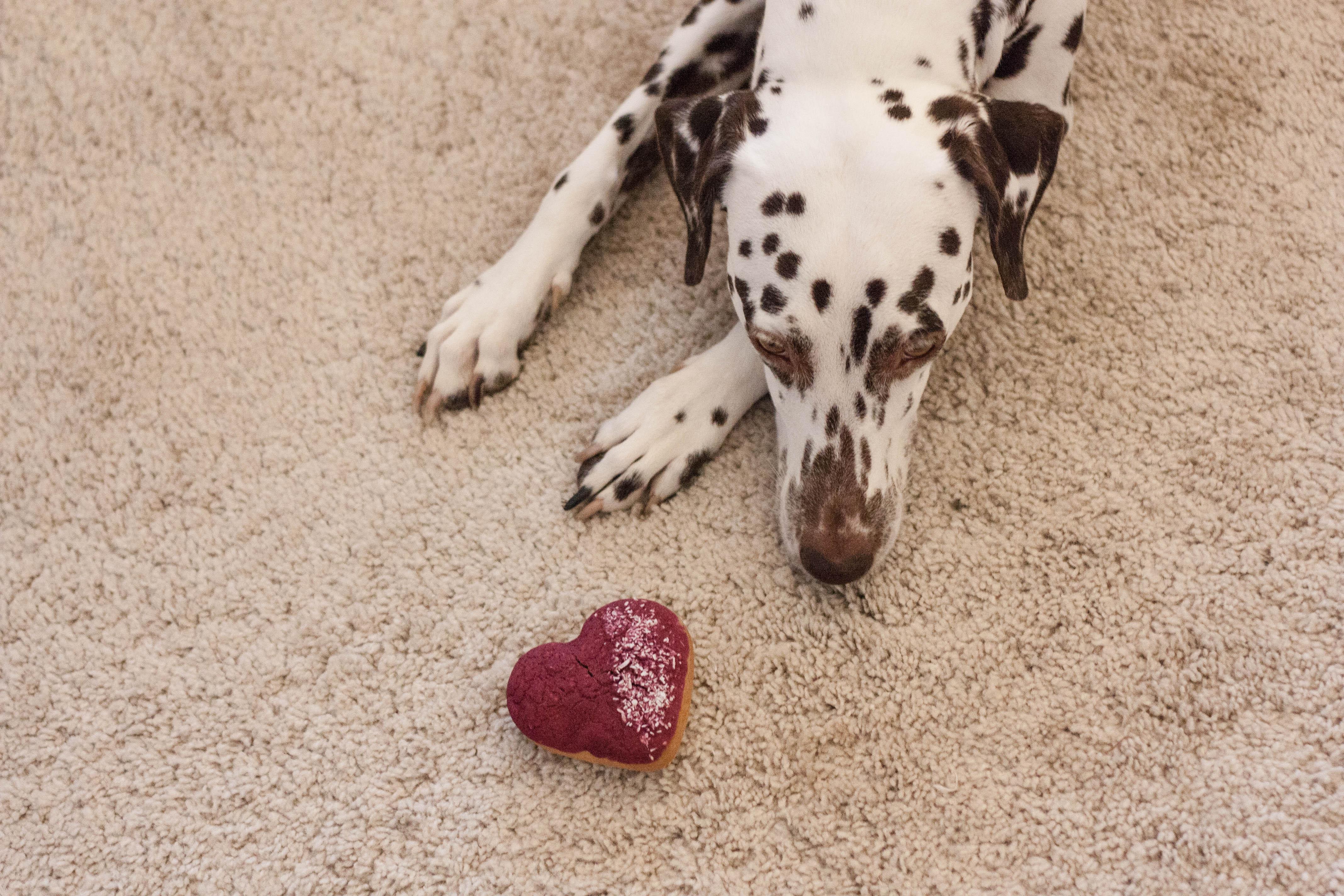 Valentinstag für den Hund süße Kekse ich liebe meinen Hund