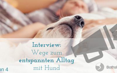 Alles was du über den Alltag mit deinem Zappelhund wissen musst