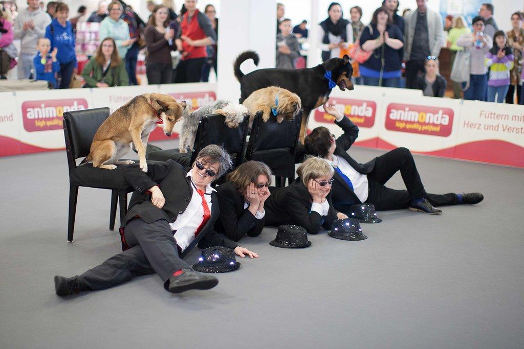 Dogdance Performance Heimtiermesse Muenchen Bericht und Fotos 2017