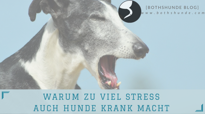 Hundeerziehung hyperaktive Hunde Stress beim Hund macht krank hyperaktive Hunde