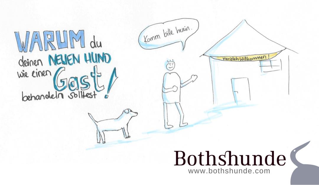 Warum dein neuer Hund wie ein Gast ist.