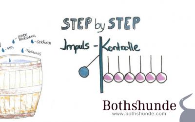 Step by Step: Impulskontrolle für deinen hyperaktiven Hund