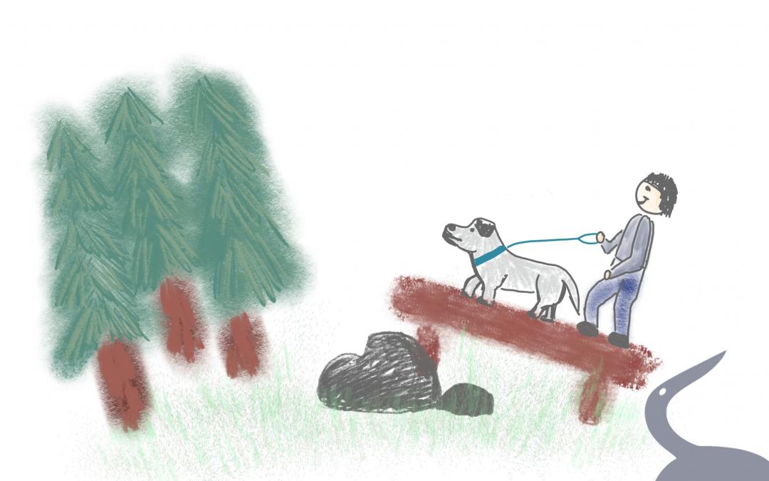 Entspannter Spaziergang mit Hund – Teil 3: über Stock und Stein
