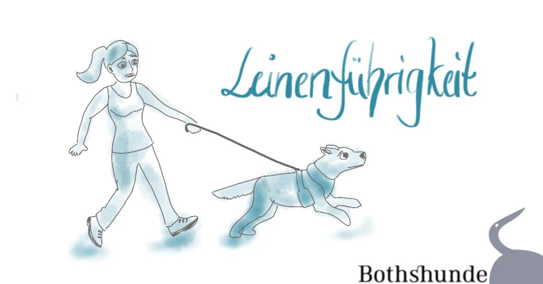 Leinenführigkeit Fehler Leine Hundetraining
