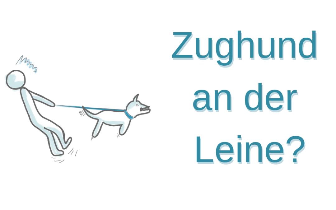 Leinenführigkeit trainieren – so machst du es dir und deinem Hund leichter