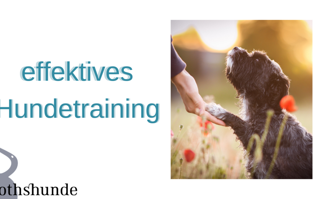 effektives Hundetraining