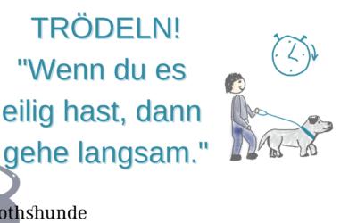 Trödeln mit dem Hund für weniger Verhaltensprobleme!