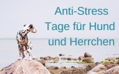 Anti-Stress-Tage