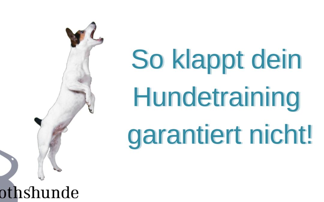 """So klappt dein Hundetraining garantiert nicht! – """"Die reinste Form des Wahnsinns…"""""""