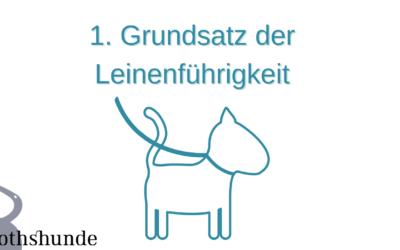 Erster Grundsatz der Leinenführigkeit! So klappt das Leinentraining mit deinem Hund