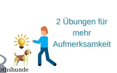 2 Übungen für mehr Aufmerksamkeit deines Hundes!