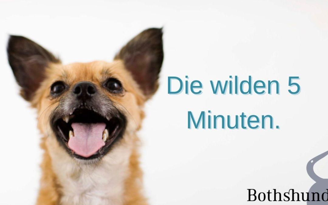 die verrückten 5 Minuten – so beruhigst du deinen Hund