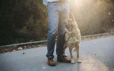 Hundeschule Ja oder Nein? 5 Vorteile eines professionellen Hundetrainings