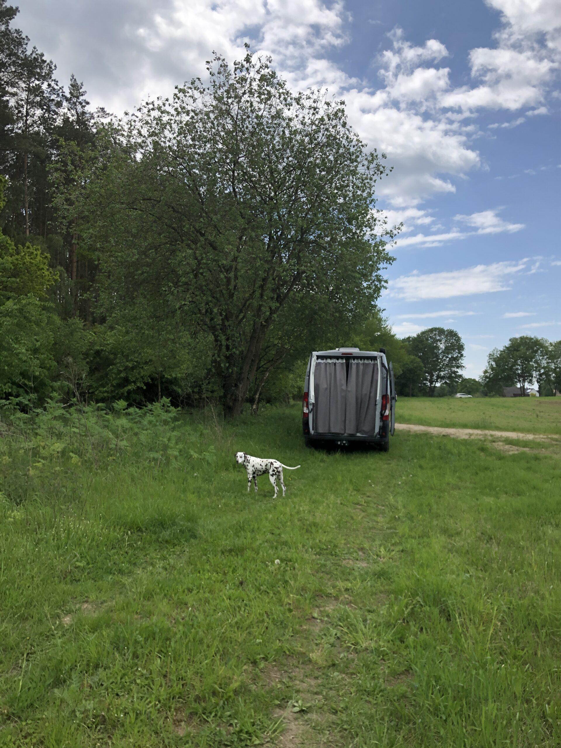 Camper Reisen mit Hund