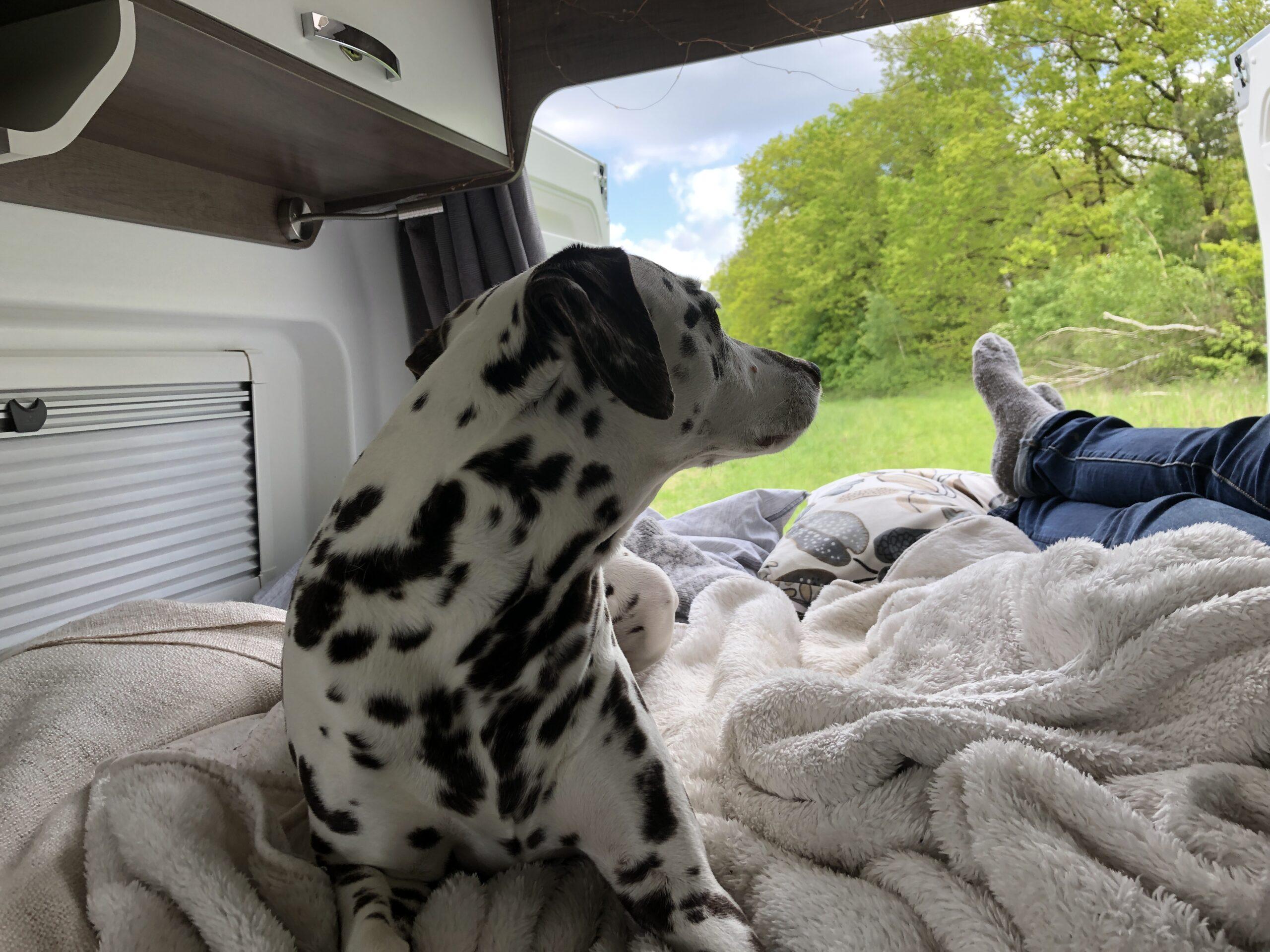 Erfahrungsbericht Camping Reise mit Hund