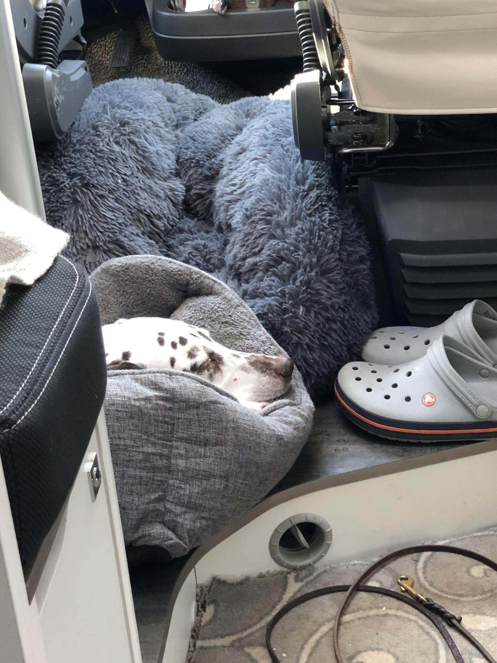 Hund im Wohnmobil alleine lassen