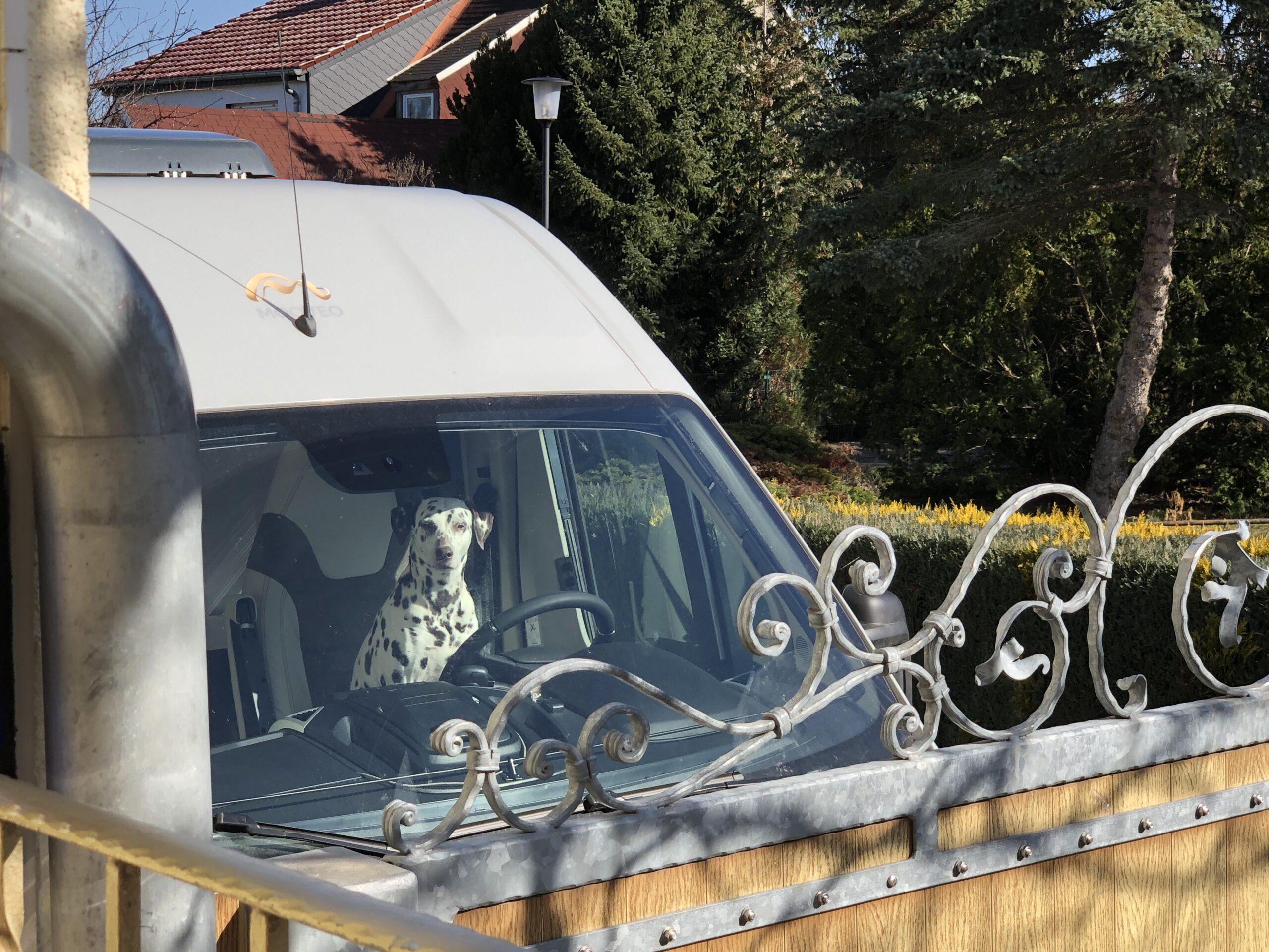 Vanlife mit Hund reisen im Camper